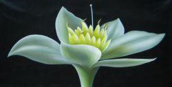 Obraz - Květ v rozpuku