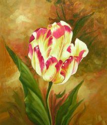 Obraz - Tulipán