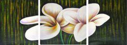 Obrazy - Bílé květy