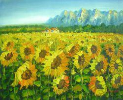Obraz - Slunečnicové pole 5